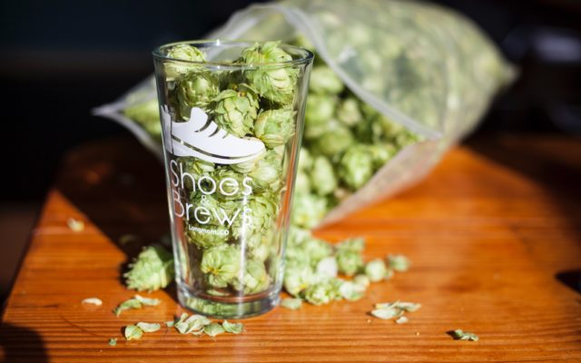 Whole hops in pint glass